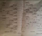 Turnierplan